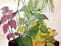 stage dessin Floral cours Atelier 2/4 Paris